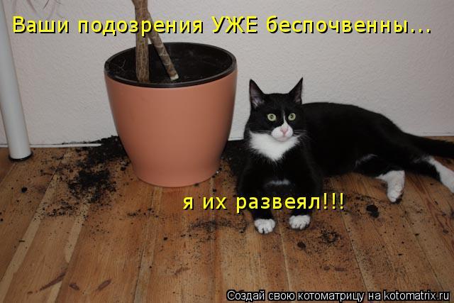 Котоматрица: Ваши подозрения УЖЕ беспочвенны... я их развеял!!!