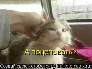 Котоматрица: А поцеловать?