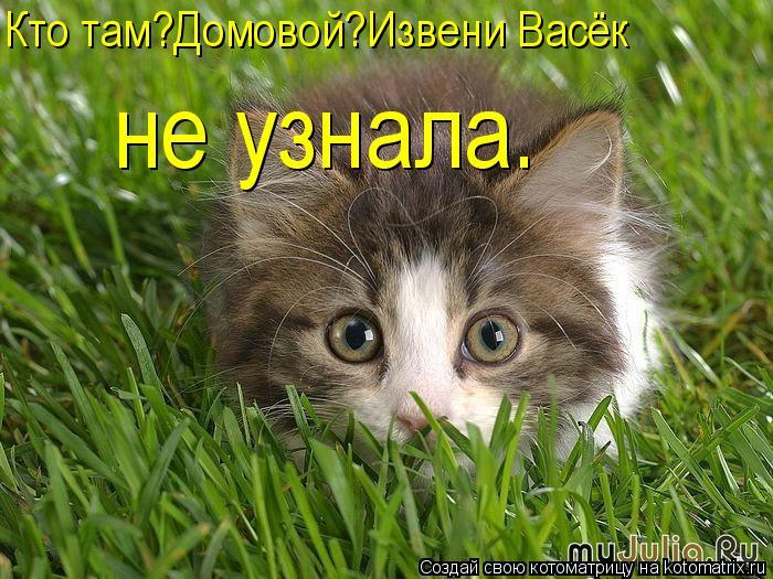 Котоматрица: Кто там?Домовой?Извени Васёк не узнала.