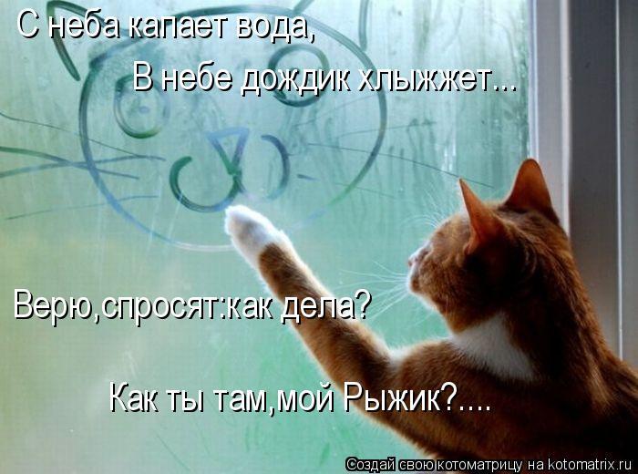Котоматрица: С неба капает вода, В небе дождик хлыжжет... Верю,спросят:как дела? Как ты там,мой Рыжик?....