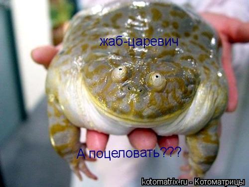 Котоматрица: жаб-царевич А поцеловать???