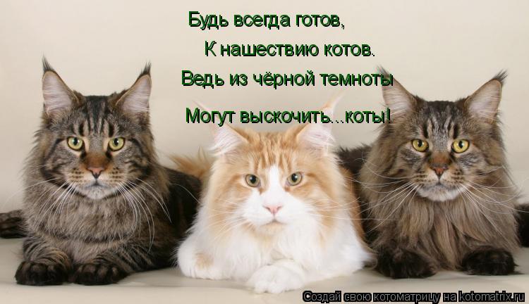 Котоматрица: Будь всегда готов, К нашествию котов. Ведь из чёрной темноты Могут выскочить...коты!