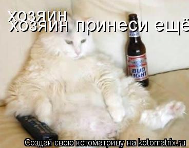 Котоматрица: хозяин  хозяин принеси ещё пиво