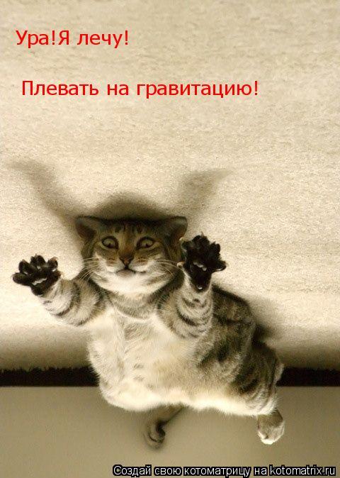 Котоматрица: Ура!Я лечу! Плевать на гравитацию!
