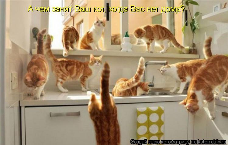 Котоматрица: А чем занят Ваш кот, когда Вас нет дома?