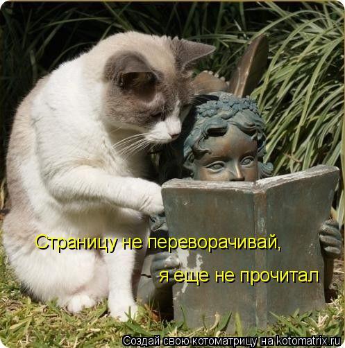 Котоматрица: Страницу не переворачивай, я еще не прочитал