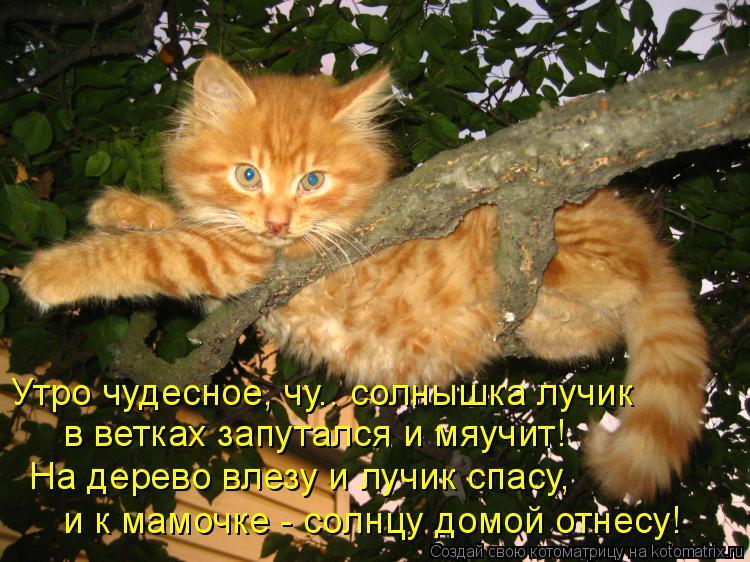 Котоматрица: Утро чудесное, чу.. солнышка лучик в ветках запутался и мяучит! На дерево влезу и лучик спасу, и к мамочке - солнцу домой отнесу!