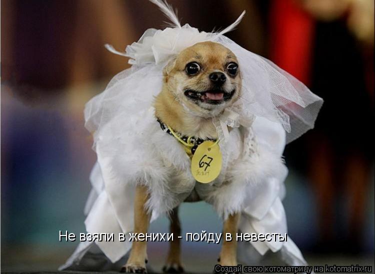 Котоматрица: Не взяли в женихи - пойду в невесты