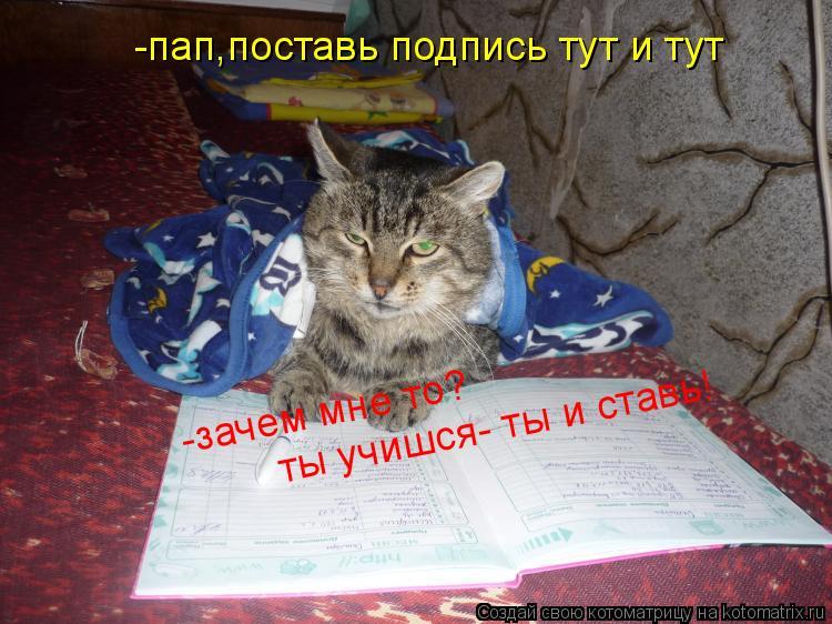 Котоматрица: -пап,поставь подпись тут и тут -зачем мне то?  ты учишся- ты и ставь! ты учишся- ты и ставь!