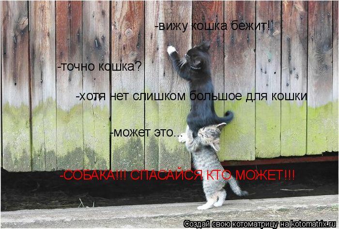 Котоматрица: -вижу кошка бежит! -точно кошка? -хотя нет слишком большое для кошки -может это... -СОБАКА!!! СПАСАЙСЯ КТО МОЖЕТ!!!