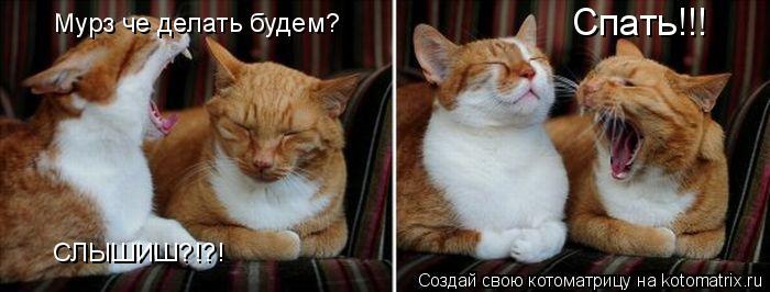 Котоматрица: Мурз че делать будем? СЛЫШИШ?!?! Спать!!!