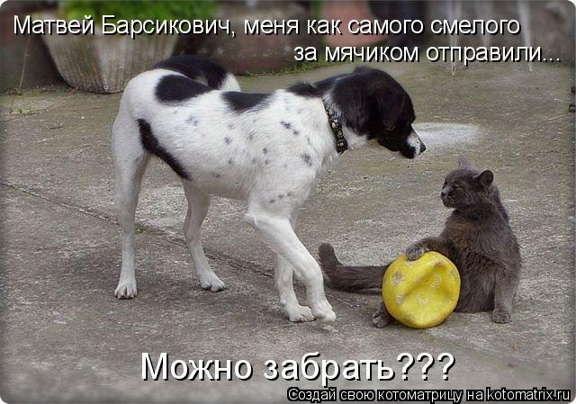 Котоматрица: Матвей Барсикович, меня как самого смелого за мячиком отправили... Можно забрать???
