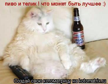 Котоматрица: пиво и телик ! что может быть лучшее :)