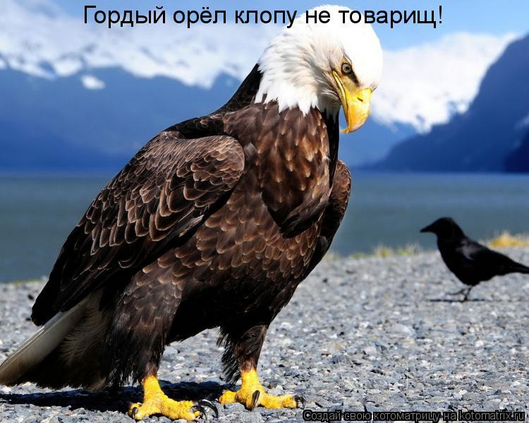 Котоматрица: Гордый орёл клопу не товарищ!