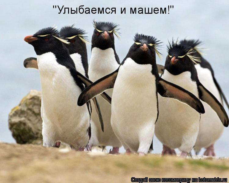 """Котоматрица: """"Улыбаемся и машем!"""""""