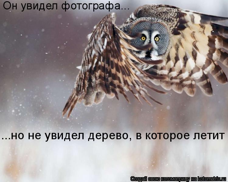 Котоматрица: Он увидел фотографа... ...но не увидел дерево, в которое летит