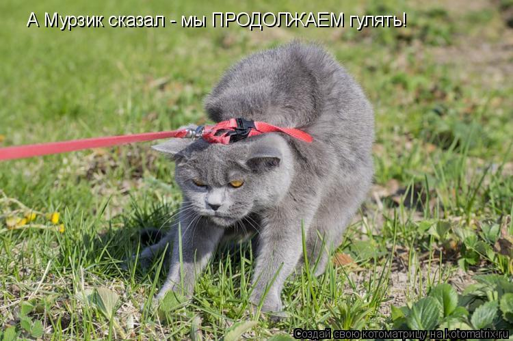 Котоматрица: А Мурзик сказал - мы ПРОДОЛЖАЕМ гулять!