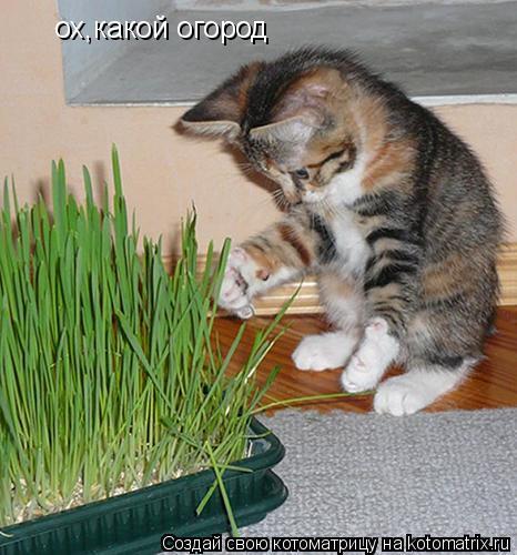 Котоматрица: ох,какой огород