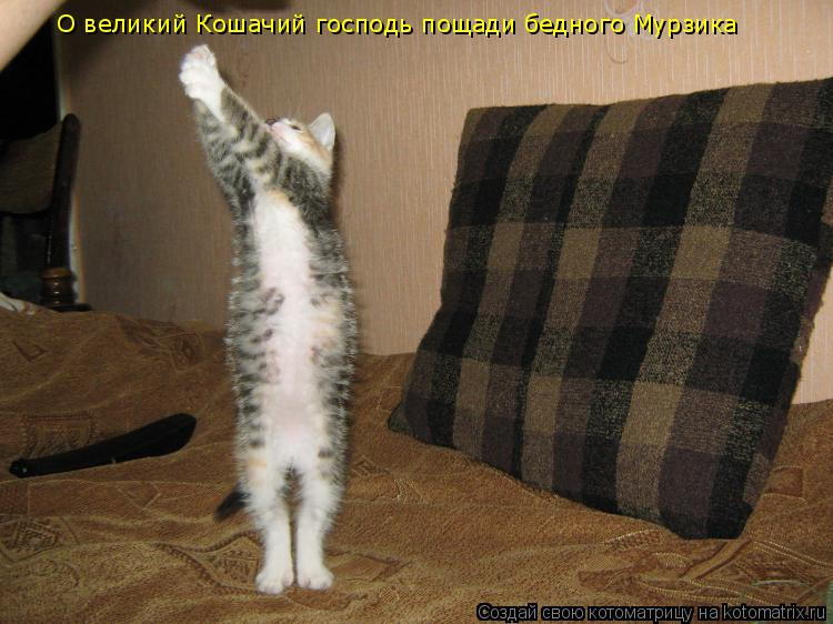 Котоматрица: О великий Кошачий господь пощади бедного Мурзика
