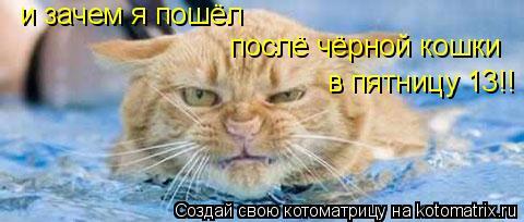 Котоматрица: и зачем я пошёл  послё чёрной кошки в пятницу 13!!
