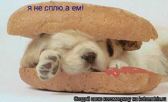 Котоматрица: я не сплю,а ем!