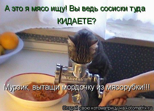 Котоматрица: Мурзик, вытащи мордочку из мясорубки!!! А это я мясо ищу! Вы ведь сосиски туда  КИДАЕТЕ?