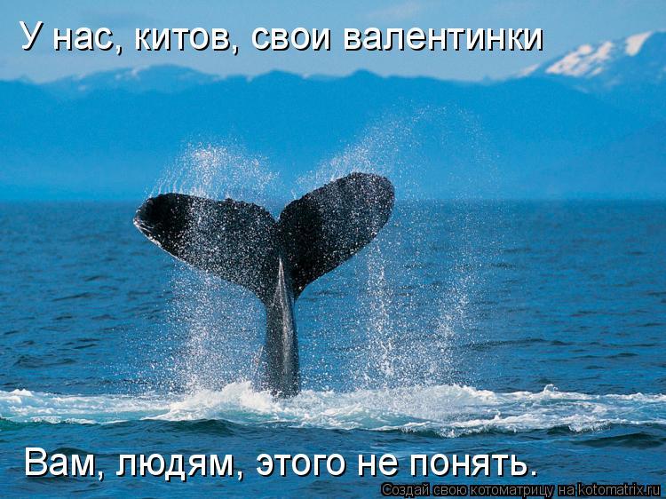 Котоматрица: У нас, китов, свои валентинки Вам, людям, этого не понять.