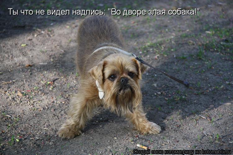 """Котоматрица: Ты что не видел надпись: """"Во дворе злая собака!"""""""