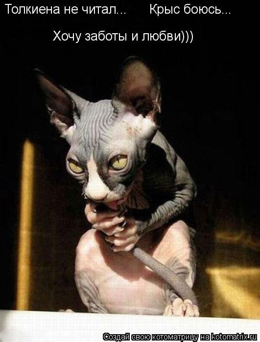 Котоматрица: Толкиена не читал... Крыс боюсь... Хочу заботы и любви)))