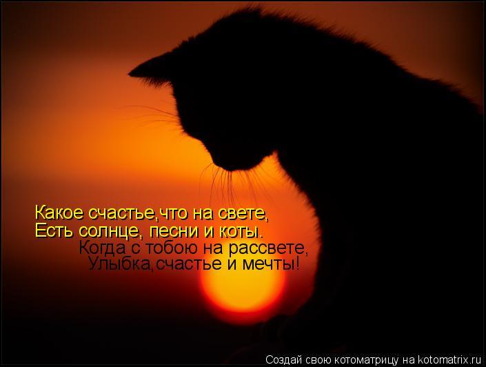 Котоматрица: Какое счастье,что на свете,  Есть солнце, песни и коты.  Когда с тобою на рассвете, Улыбка,счастье и мечты!