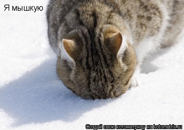 Котоматрица: Я мышкую