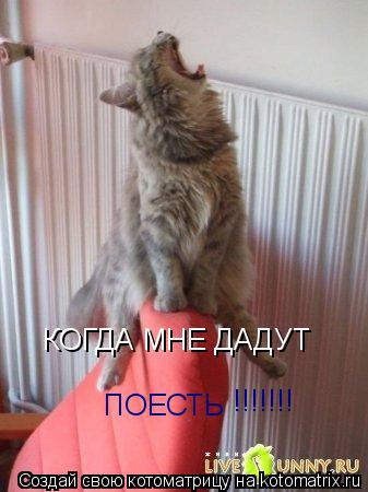 Котоматрица: КОГДА МНЕ ДАДУТ  ПОЕСТЬ !!!!!!!