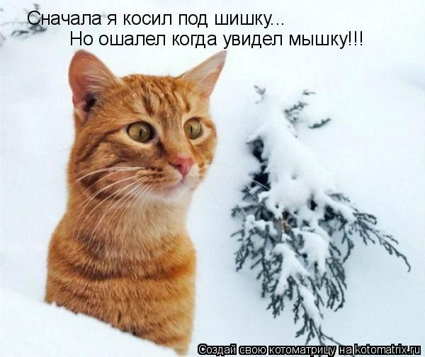 Котоматрица: Сначала я косил под шишку... Но ошалел когда увидел мышку!!!