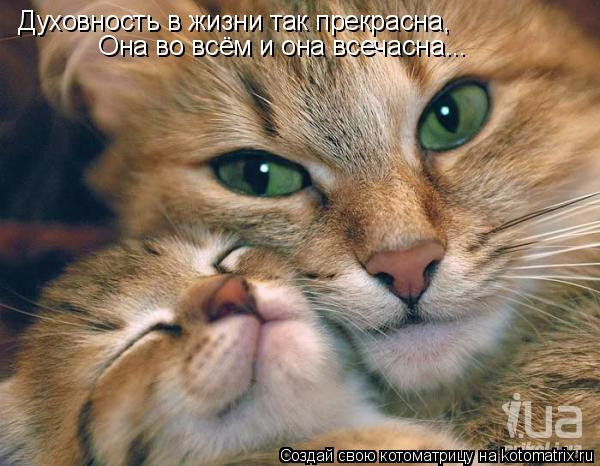 Котоматрица: Духовность в жизни так прекрасна,  Она во всём и она всечасна...