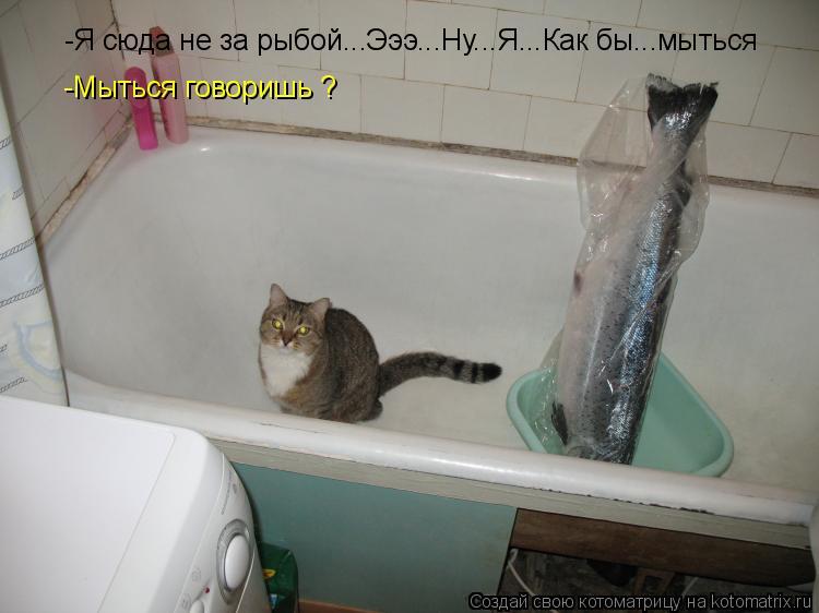 Котоматрица: -Мыться говоришь ? -Я сюда не за рыбой...Эээ...Ну...Я...Как бы...мыться