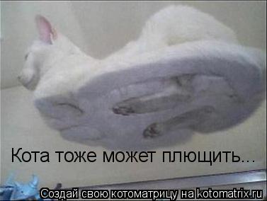Котоматрица: Кота тоже может плющить...