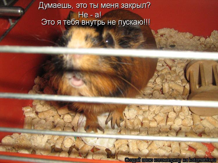 Котоматрица: Думаешь, это ты меня закрыл? Не - а! Это я тебя внутрь не пускаю!!!