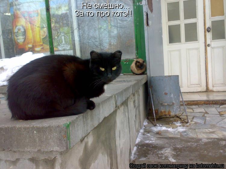 Котоматрица: Не смешно... За то про котэ!!