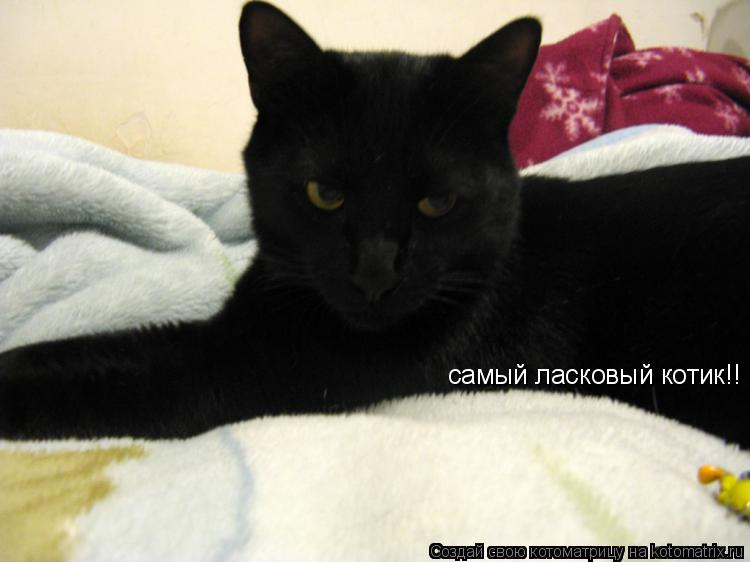 Котоматрица: самый ласковый котик!!