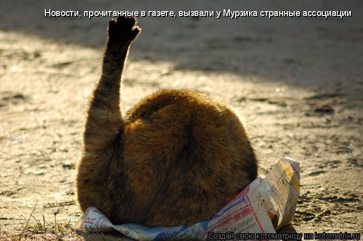 Котоматрица: Новости, прочитанные в газете, вызвали у Мурзика странные ассоциации