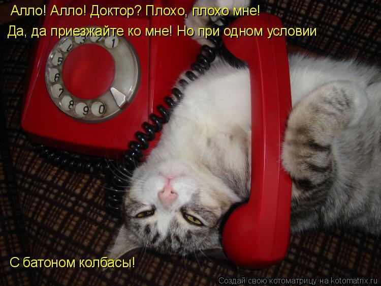Котоматрица: Алло! Алло! Доктор? Плохо, плохо мне! Да, да приезжайте ко мне! Но при одном условии С батоном колбасы!