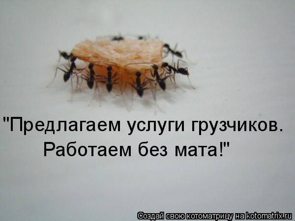 "Котоматрица: ""Предлагаем услуги грузчиков. Работаем без мата!"""