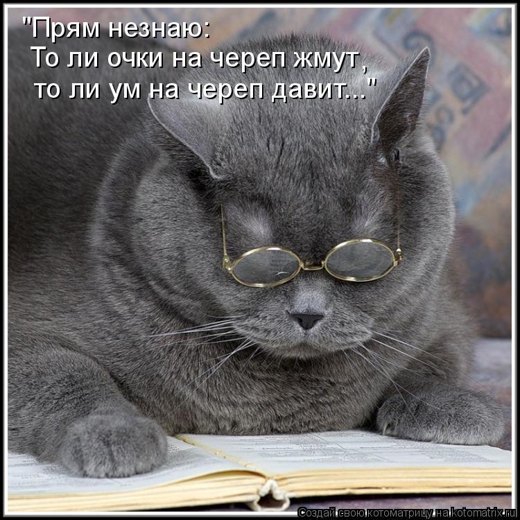 "Котоматрица: ""Прям незнаю: То ли очки на череп жмут то ли ум на череп давит..."" ,"