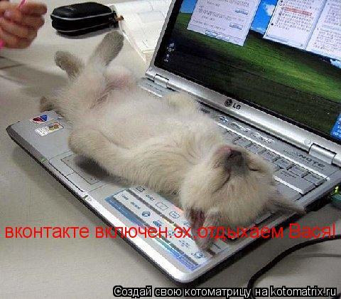 Котоматрица: вконтакте включен.эх,отдыхаем Вася!