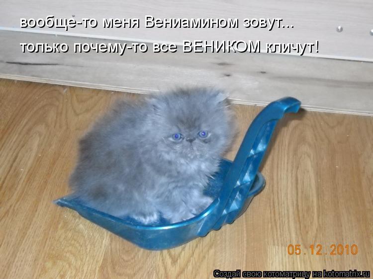 Котоматрица: вообще-то меня Вениамином зовут... только почему-то все ВЕНИКОМ кличут!