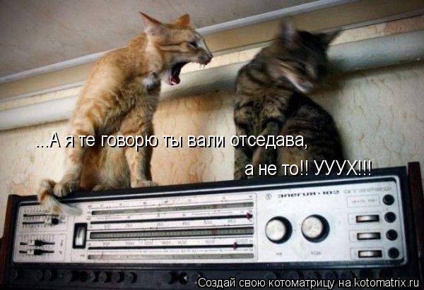 Котоматрица: ...А я те говорю ты вали отседава, а не то!! УУУХ!!!