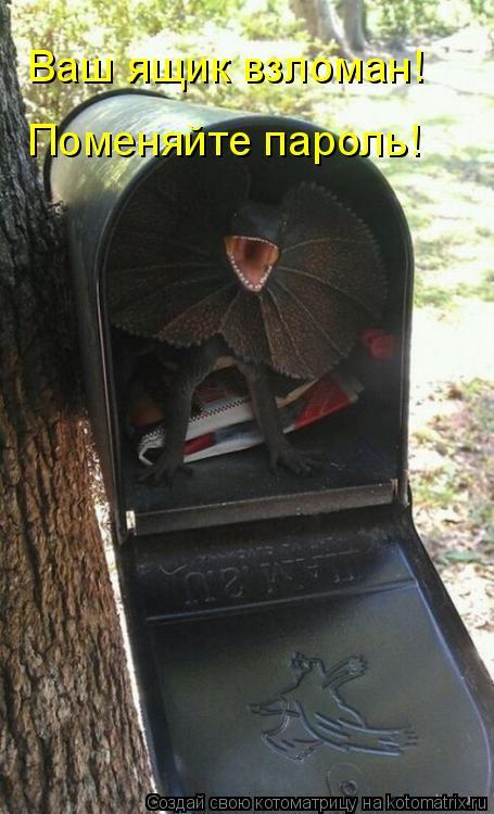 Котоматрица: Ваш ящик взломан! Поменяйте пароль!
