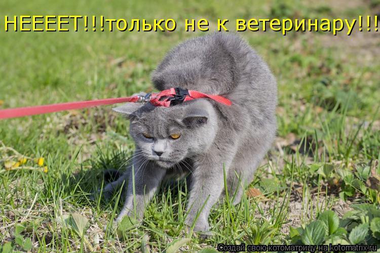 Котоматрица: НЕЕЕЕТ!!!только не к ветеринару!!!