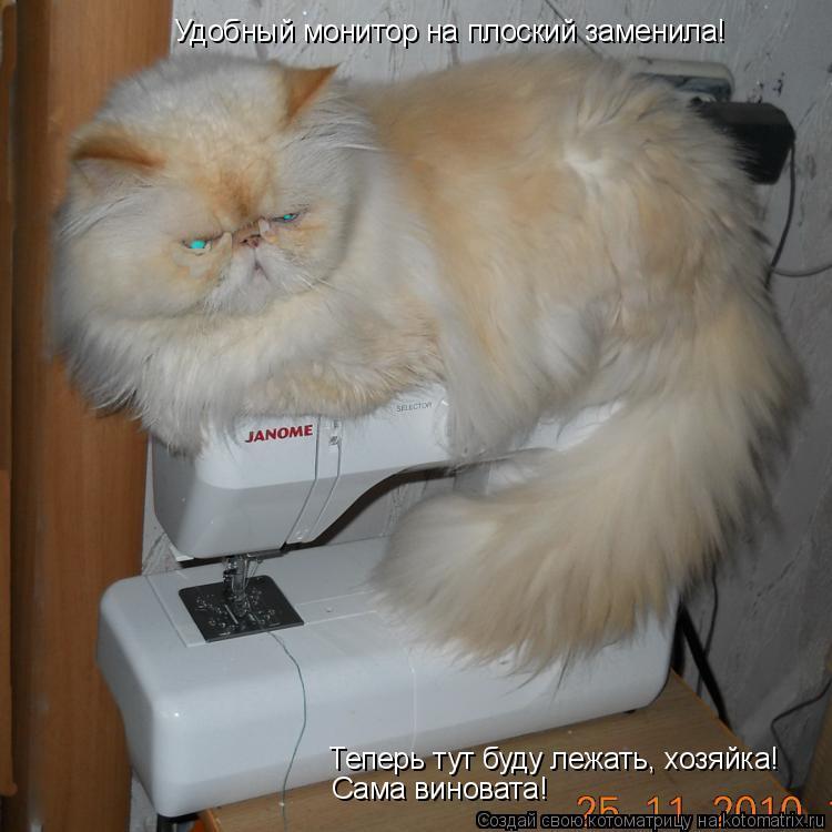 Котоматрица: Теперь тут буду лежать, хозяйка! Удобный монитор на плоский заменила! Сама виновата!
