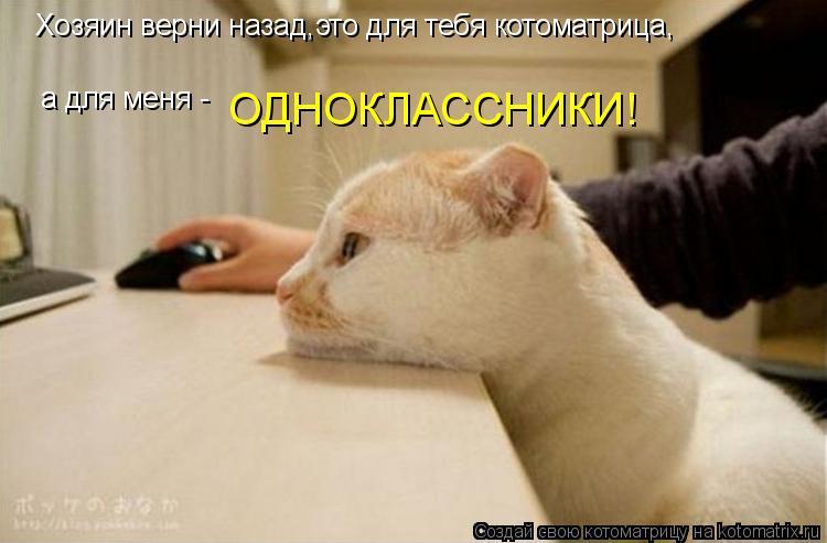 Котоматрица: Хозяин верни назад,это для тебя котоматрица, а для меня -  ОДНОКЛАССНИКИ!